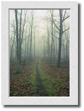 Morning Fog on the Appalachian Trail