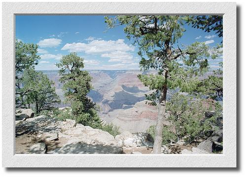Mather Point, Trees